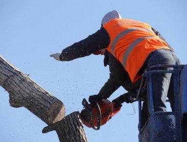 Entreprise spécialisée dans l'élagage d'arbres à Craponne
