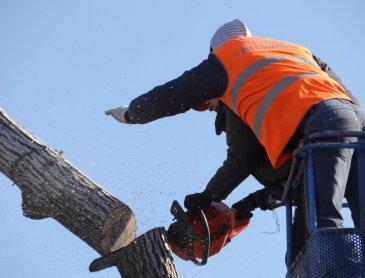 Devis gratuit pour abattage d'arbre àLatour du Pin