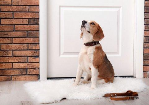 Professionnel étude comportementale et dressage chien Roanne