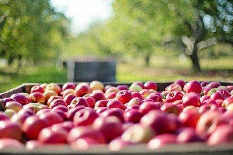 Où trouver un bon producteur local de fruits sur la Côte Saint André ?